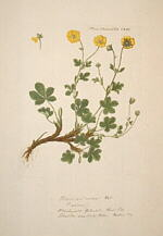 flora danica bog